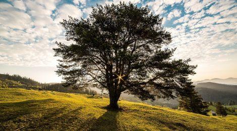 L'arbre à palabres au Caméléon