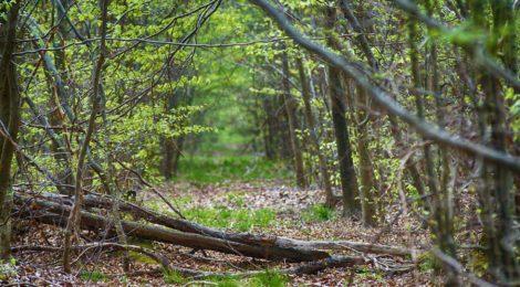 Réouverture des forêts